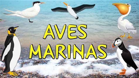 AVES MARINAS: características, alimentación, especies y más