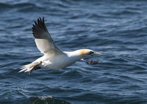 Aves Marinas en el Golfo de Cádiz: Salidas en barco ...
