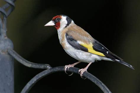 Aves más comunes de España: ¿cuáles son?