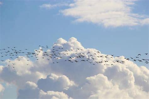 Aves Migratorias + 30 Ejemplos, Características y Más