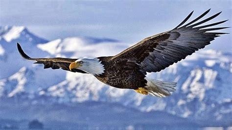 Aves peligrosas: 5 aves que son un peligro para los seres ...