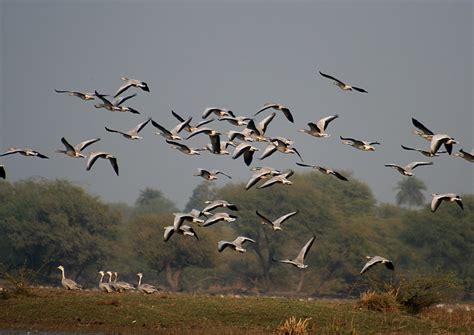 Aves que migran   Zoo Logik