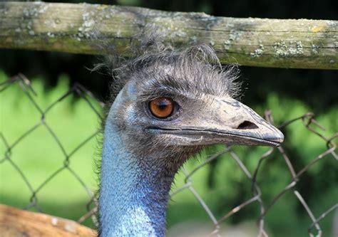 Aves que no vuelan: por qué no lo hacen, tipos y mucho más