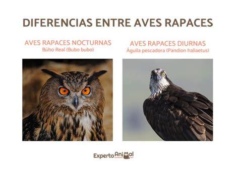 Aves rapaces diurnas   Ejemplos y características