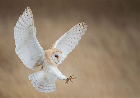 Aves rapaces diurnas y nocturnas   Mis Animales