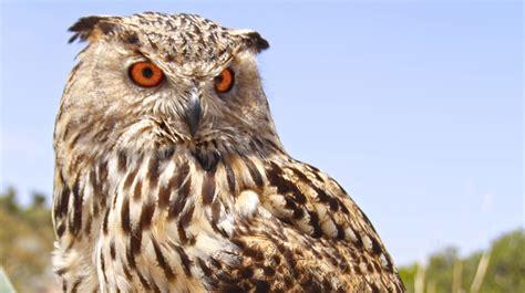Aves rapaces   Fundación Parques Reunidos