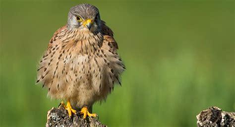 Aves rapaces, guía básica