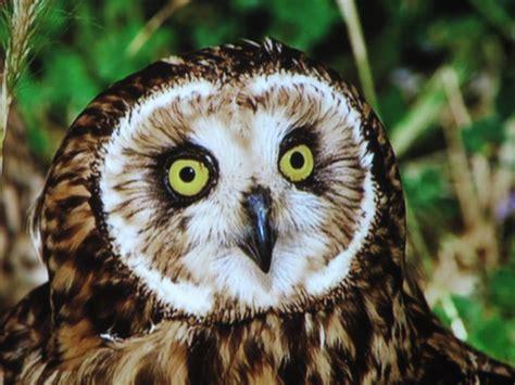 aves rapaces nocturnas   torsin.webege.com
