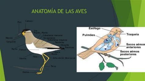 Aves y mamíferos