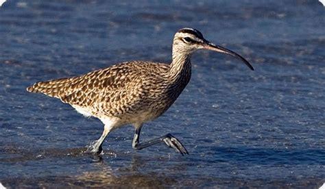 Aves y naturaleza protegidas en la provincia de Santa Fe ...