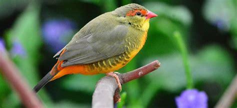 Aves y pájaros :: Toda la información sobre los pájaros y ...