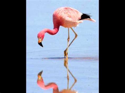Aves Zancudas, FELIX ARIAS   YouTube