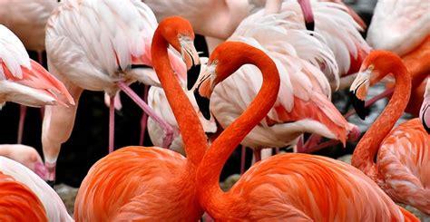 Aves zancudas   Mundo Mascota