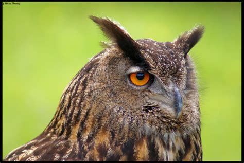 Aves… de las que vuelan | slayertxu