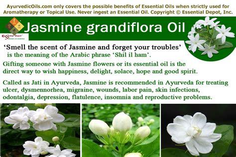 Ayurvedic health benefits of Jasmine Grandiflora oil ...
