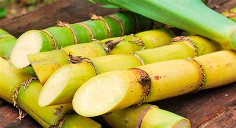 ¡Azúcar! El sabor de la caña…   Secretaría de Agricultura ...