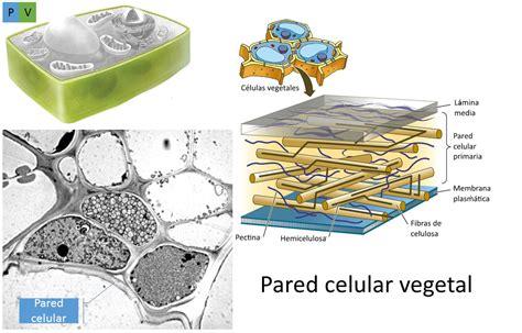 B.log.ia 2.0: Estructura y función celular: los orgánulos II