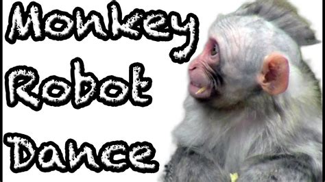 Baby monkey like terrified how the robot dance   YouTube