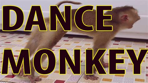 Baby Monkey stretches and dances in the bathroom   YouTube