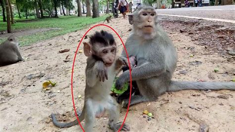 Baby Monkey Want To Dance, Why ? ST326   YouTube