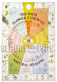 Bach Flower Chart Laminated, need this for my Naturopathy ...