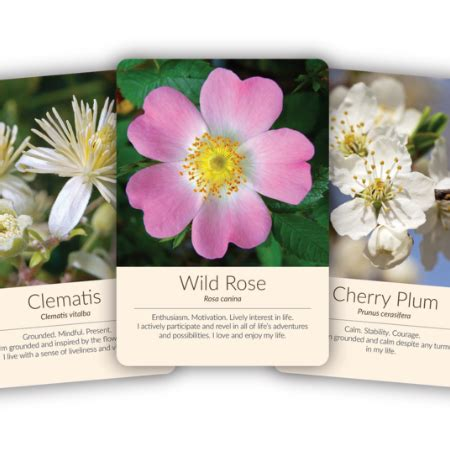 Bach Flower Essence Cards   Based on Dr Bach s Healing ...