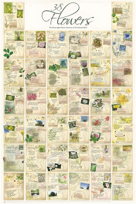 Bach Flower Essence Poster   Complete Group | Flower ...