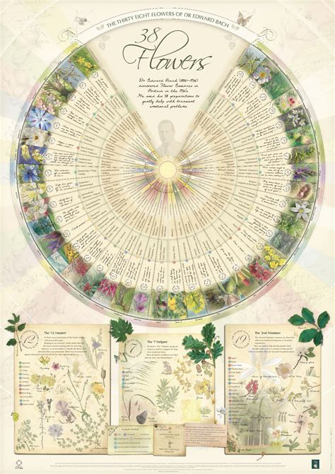 Bach Flower Essence Poster Wall Chart Print the 38 Essences A1