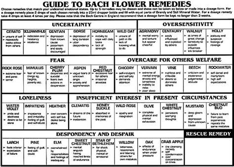 Bach Flower Essences for Breaking Addiction   A hangover ...