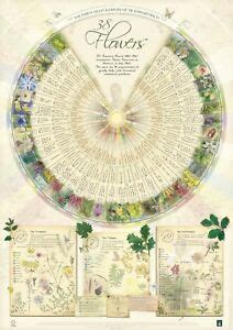 Bach Flower Poster Wall Chart for the 38 Essences Remedies ...