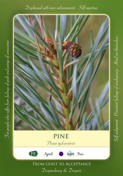 Bach Flower Remedy   PINE | Bach flowers, Flower cards