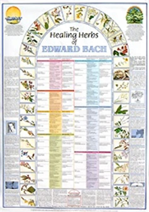 Bach Flower Remedy Wall Chart   Ready Reference Poster