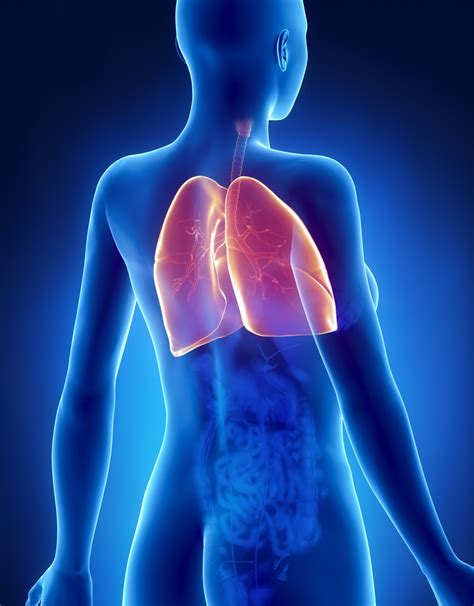 Back and Chest pain including lung pain   connections ...
