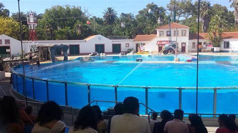 Baía dos golfinhos jardim zoológico de lisboa 2013   YouTube