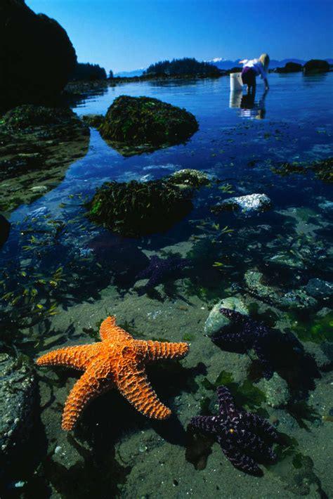 Baixar a imagem para telefone: Animais, Água, Fundo, Mar ...