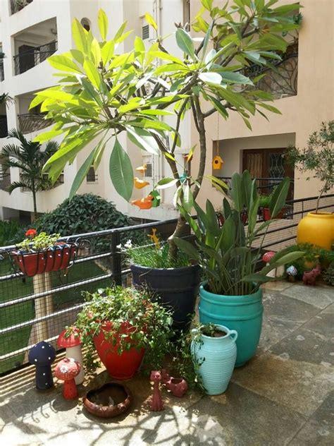 balcony garden My Sunny Balcony | House tree plants, Small ...