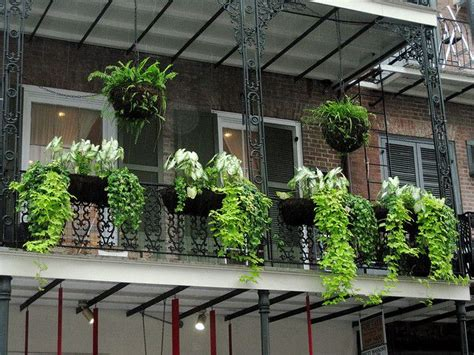 Balcony hanging plants • HelpfulGardener.com Gardening Forum