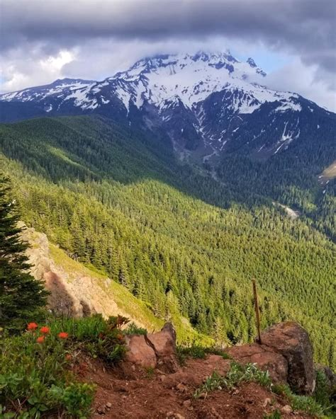 Bald Mountain from Lolo Pass Trail   Oregon | AllTrails