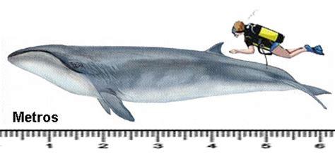 Baleias   Saúde Animal | Saúde Animal