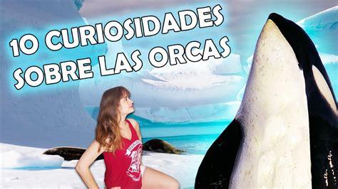 ¿BALLENAS ASESINAS? || CURIOSIDADES SOBRE LAS ORCAS   YouTube