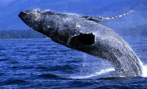 ballenas   ecoturismo esoterico