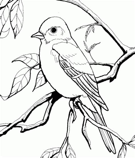 Baltimore Orioles Coloring Pages   Coloring Home
