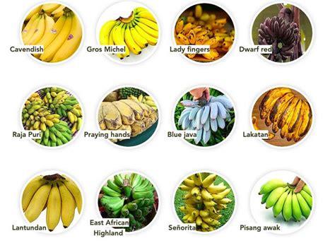 Bananageddon   can we save our beloved bananas?   Blue ...