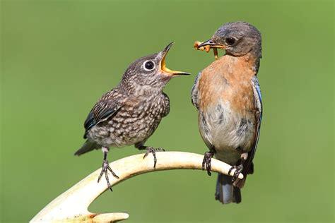 BANCO DE IMÁGENES GRATIS: Ave alimentando a sus crías en ...