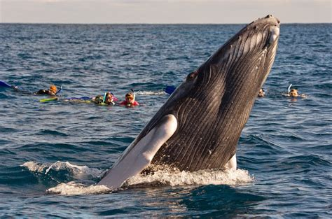 Banco de Plata, el santuario caribeño de las ballenas ...