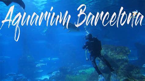 Barcelona Aquarium   best of Barcelona attractions   YouTube
