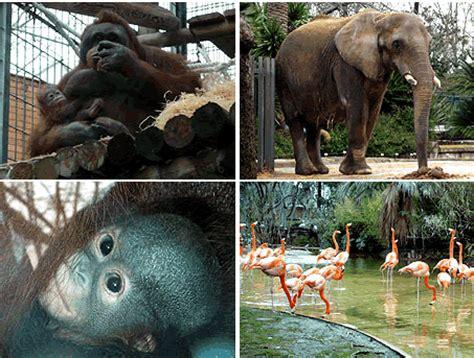 Barcelona info: Zoo de Barcelona