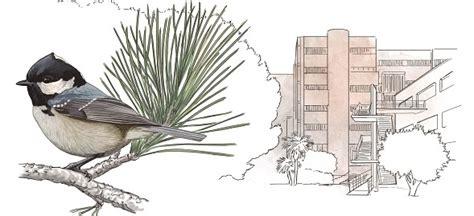 Barcelona, la ciutat dels 160.000 ocells que nidifiquen al ...
