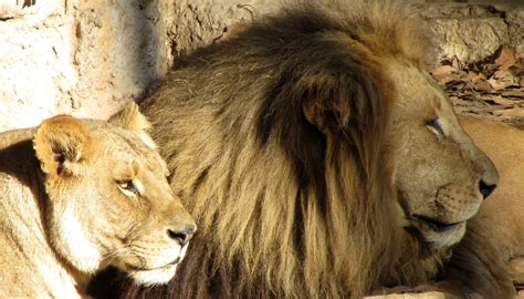 BARCELONA mi alma!: Zoo de Barcelona