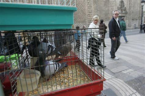 Barcelona prohíbe definitivamente venta de pájaros en La ...